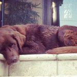 Mckayla-Maroney-Dog