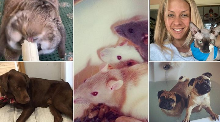 A collage of Alexandra Hall's pet animals